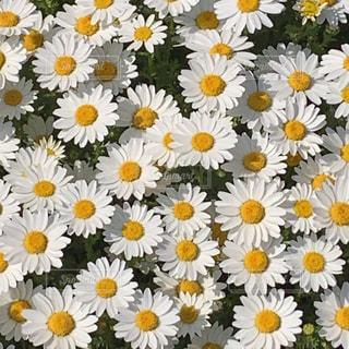 花の写真・画像素材[1976481]