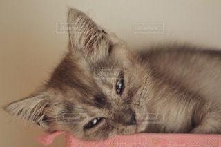 猫の写真・画像素材[29663]