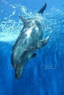 青い水の中を泳ぐイルカの写真・画像素材[1328701]