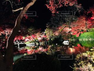 自然,秋,紅葉,京都,池,ライトアップ,紅葉狩り,モミジ,永観堂,京都市左京区