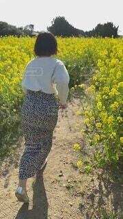 風景,花,春,花畑,屋外,菜の花,走る,人物,人,菜の花畑,草木,パーソン