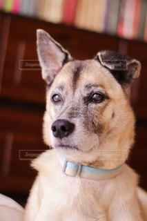 愛犬のジロウの写真・画像素材[2715097]