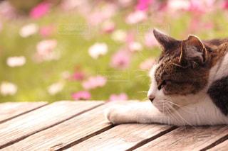 お花畑で昼寝中の写真・画像素材[2979046]