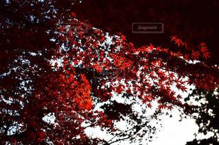近くの木のアップの写真・画像素材[1640039]