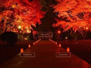 ライトアップの写真・画像素材[3715007]