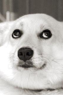 犬,白黒,わんこ,目,背景素材,びっくり