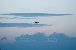 水の体の上を飛んでいる鳥の写真・画像素材[1328996]