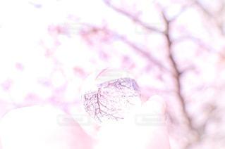 花,春,桜,ピンク,ガラス玉,神戸,一眼レフ,須磨,天井川,妙法寺川