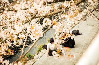 花,桜,ピンク,ぼかし,神戸,一眼レフ,須磨,天井川,妙法寺川