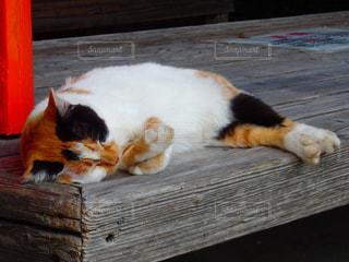 猫,動物,木,屋外,景色,オレンジ,木目,哺乳類,夏バテ,エリア