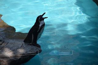 動物,プール,暑い,ペンギン,夏バテ,熱中症,ペンギン「暑すぎる!!!」