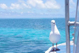 水の体の前で鳥の立っています。の写真・画像素材[1338227]