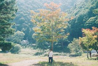 自然,風景,秋,カメラ,紅葉,屋外,写真,フィルム,栃木,秋空,本栖湖,陽ざし