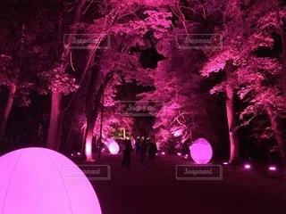 大きな紫の傘の写真・画像素材[1398148]