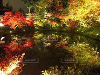水面に映る紅葉の写真・画像素材[1683732]