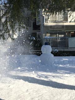 雪,屋外,緑,白,晴れ,樹木,雪だるま,地面,通り,草木