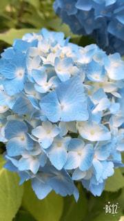 近くの花のアップの写真・画像素材[1368499]