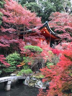 秋,紅葉,黄色,お寺,赤色