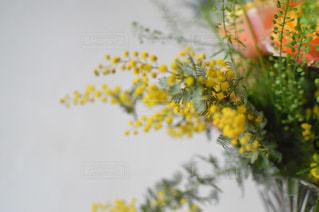 花,春,黄色,ビタミンカラー,イエロー,yellow