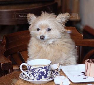 カフェで一休みの写真・画像素材[2260946]