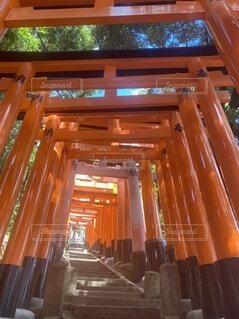 京都伏見稲荷の写真・画像素材[4156144]
