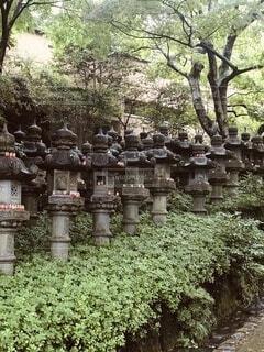 勝尾寺の写真・画像素材[4156151]