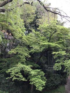 森林の写真・画像素材[4156192]