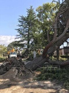 自然災害の写真・画像素材[4156218]