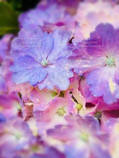 近くの花のアップの写真・画像素材[1368181]