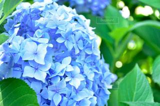 近くの花のアップの写真・画像素材[1352630]