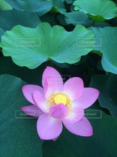 近くの花のアップの写真・画像素材[1367648]