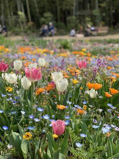 花の写真・画像素材[1986949]