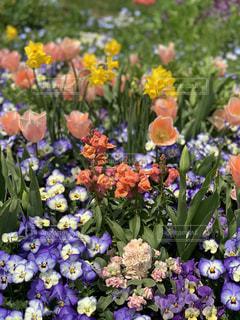花の写真・画像素材[1986963]