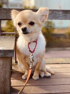 犬の写真・画像素材[2014795]