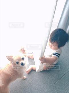 小さな犬をひもでつないでいる手の写真・画像素材[2178527]