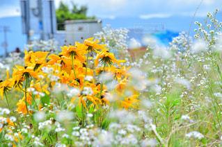 花,植物,黄色,道端,幸せ,イエロー,白色,yellow,多彩
