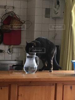 猫,水,ポット