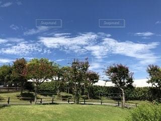 自然,空,公園,秋,屋外,景色,横浜,秋空,眺め