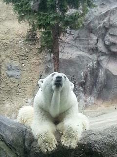 動物,木,動物園,しろくま,猛暑,クマ,だらけ