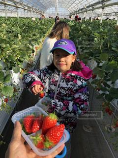 女の子,いちご,苺,フルーツ,可愛い,いちご狩り,食べ放題,イチゴ,イチゴ狩り,苺狩り