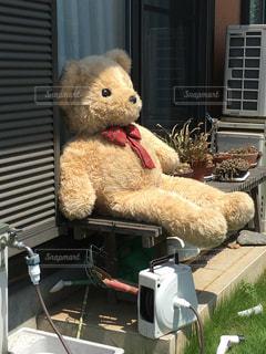 屋外,日焼け,ぬいぐるみ,熊,日向ぼっこ,ひなたぼっこ,猛暑,くまさん,熱中症,クマ,真夏日