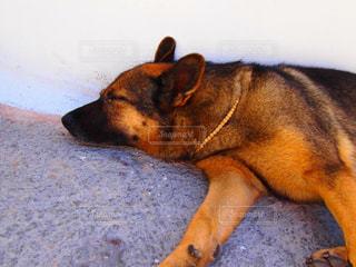 犬,動物,お昼寝,猛暑,夏バテ