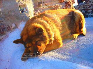 犬,昼寝,ヨーロッパ,ぐっすり,野良犬,夏バテ,レジャー・趣味