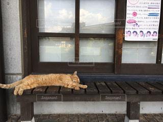 猫,動物,寝転ぶ