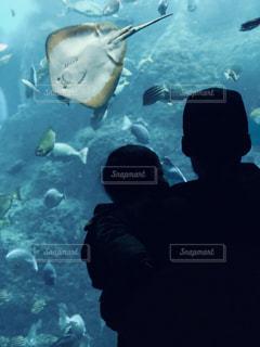 魚の写真・画像素材[1334040]