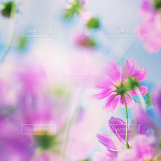 花,黄色,景色,明るい,見つめる,草木