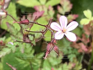 自然,花,屋外,ピンク,かわいい,野草