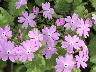 花,屋外,ピンク,かわいい,鮮やか