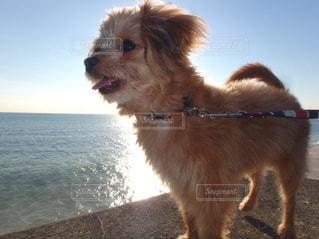 浜辺に立つ犬の写真・画像素材[2264288]