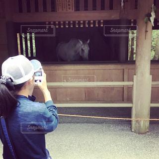 神馬を撮る娘の写真・画像素材[1424691]